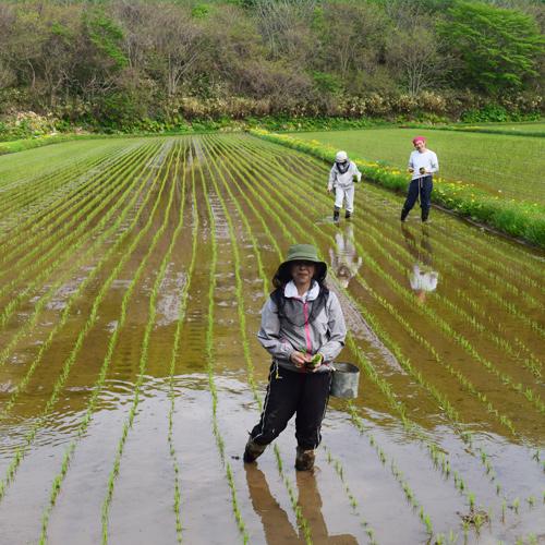 受入農家 横山さんの撮影した風景③