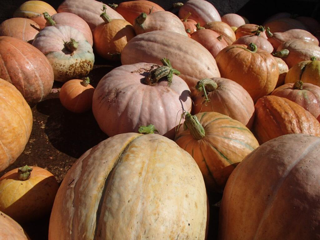 ハロウインかぼちゃ!